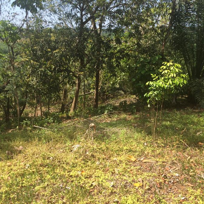 #2174 lote de 7 hectareas en Talon de Quepos, OPORTUNIDAD